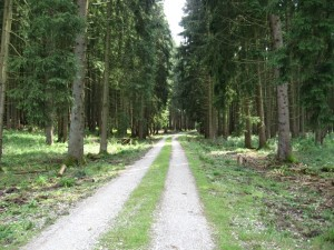 2009-07-01_48_11_forest